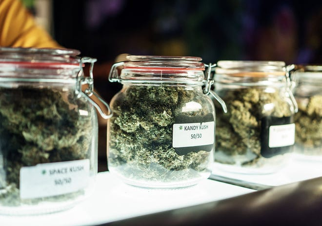 A row of clear labeled jars packed with unique dried cannabis buds.