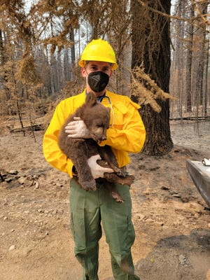 """Aug. 10, 2021: California Department of Fish and Wildlife biologist Axel Hunnicutt tends to sleeping bear cub """"Smokey Junior,"""" rescued from the Antelope Fire burning in Siskiyou County, California."""