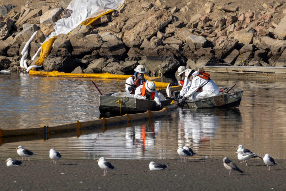 Workers in boats try to clean up floating oil near gulls in the Talbert Marshlands as a 3,000-barrel oil spill, about 126,000 gallons, from an offshore oil rig reaches the shore and sensitive wildlife habitats in Newport Beach, California on October 3, 2021.