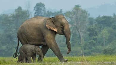 In South African national park, elephant likely killed alleged poacher