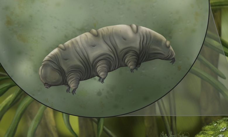 Tardigrade fossil in 16-million-year-old amber a 'once in a generation' find