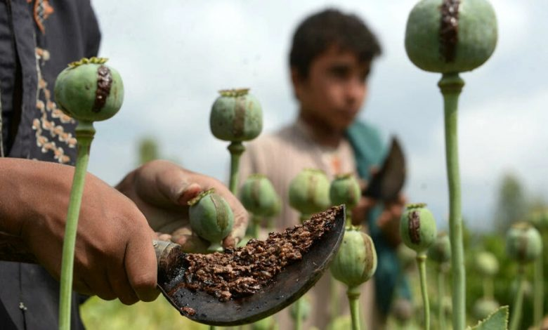 Why the Taliban's promise to stop the opium trade rings hollow